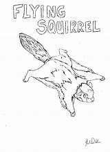 Squirrel Coloring Pages Flying Animal Printable Animals Trapping Nuisance Adair Neo sketch template