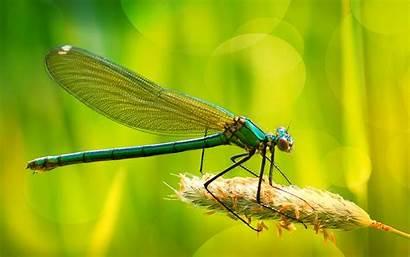 Dragonfly Desktop Wallpapers 1800 2880 Dragonflies Wallpapers13