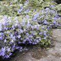 Pflanzen Für Nordseite : pflanzen kategorien pflanzen sortiert nach eigenschaften 55 seiten arten ~ Frokenaadalensverden.com Haus und Dekorationen