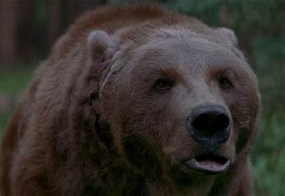 Bear Discovery Channel Bears Pits Bart Collider