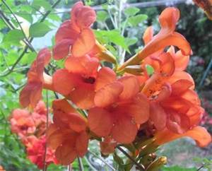 Arbustes Décoratifs à Fleurs : arbustes d 39 ext rieur d coratifs archives jardiner avec ~ Premium-room.com Idées de Décoration