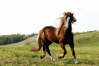 Horse Wallpapers Animal Horses Background Animals Mobile