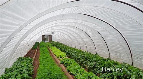 greenhouse   build  hoop house  grid world