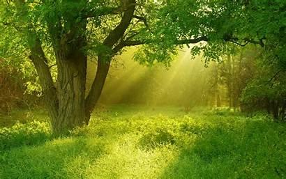 Trees Background Jooinn Plants Variants Park Through