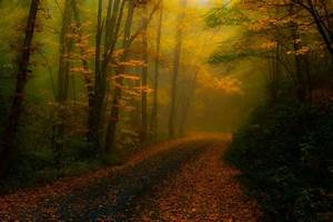 Nature, Landscape, Fall, Leaves, Forest, Road, Mist, Sunlight, Trees, Atmosphere, Path