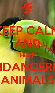 How can you help animals endangered photo - picture of ...