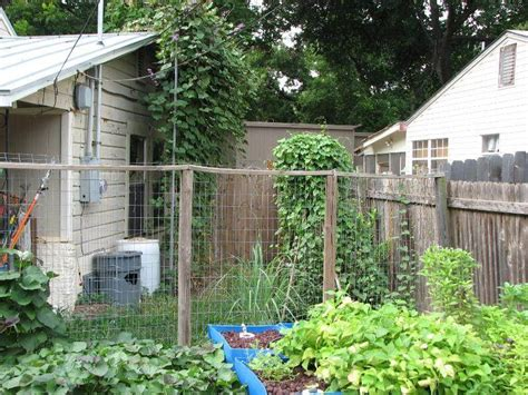 Simple Trellis For Green Beans (organic Forum At Permies