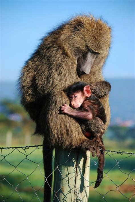 beauty animal parenting moment pictures creative