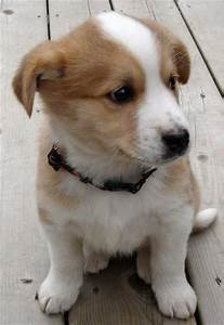 Best 10+ Mixed breed puppies ideas on Pinterest | Husky ...