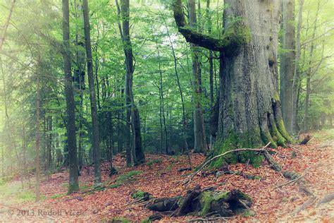 Virgin Temperate Forest | Virgin Temperate Forest National ...