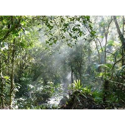 Atlantic Forest - Sunlight Through the Canopy