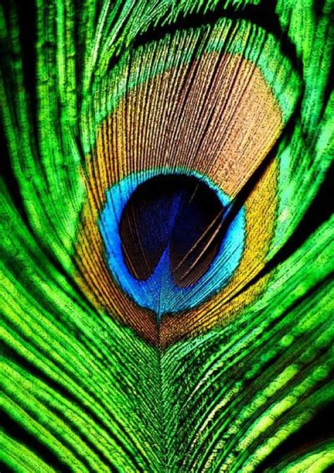 peacock feather mor pankh  cotton canvas high quality