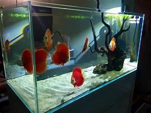 Optimale Aquarium Temperatur : discus fish water temperature tropical fish tank ~ Yasmunasinghe.com Haus und Dekorationen