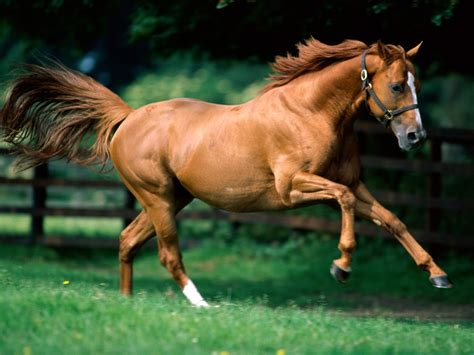 brown running horse horses animals desktop zoo wallpapers background park