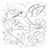 Coloring Hummingbird Hummingbirds sketch template