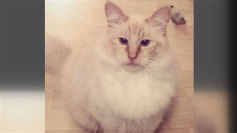 'Sounds like a sicko': Reward for cat mutilator upped to ...
