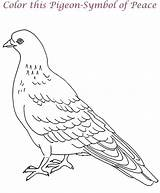 Coloring Printable Pages Pigeons Dove Pigeon Animal Animals Birds sketch template