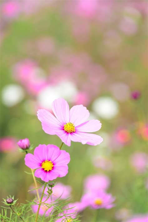nature photography  focus pink petaled flower