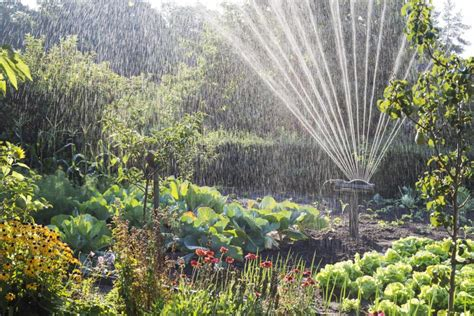 Garten Pflanzen Ohne Gießen by Pflanzen Richtig Gie 223 En Hausidee Dehausidee De