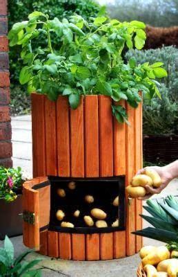 coltivare patate in vaso piccoli frutti vasi per la coltivazione di patate in terrazzo