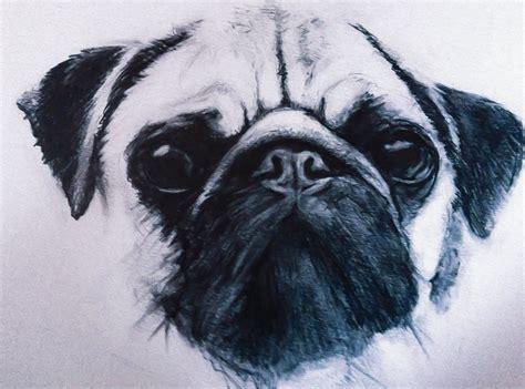pug sketch pencil drawing art pencil sketch sketch