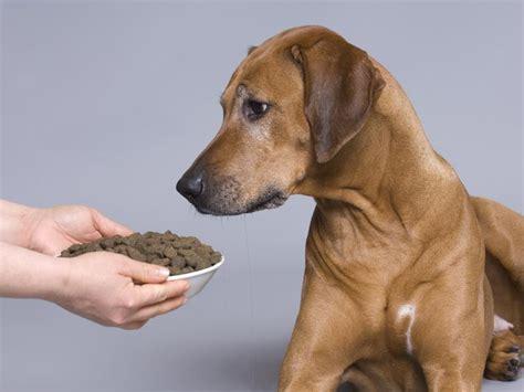 wenn der hund arthrose hat geeignetes hundefutter