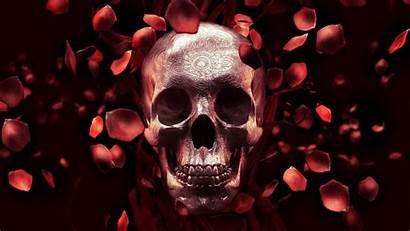 Skull Rose Petal Wallpapers Petals 4k Billelis