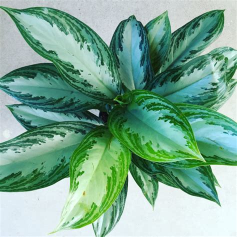 low light houseplants good earth garden center and landscaping