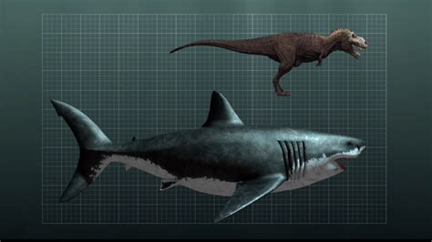 Size Comparison Between A Megalodon Shark And A T-rex