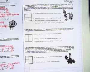 Phenotype And Genotype Worksheet Worksheets