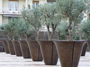 Planter Un Olivier En Pot : vous cherchez un olivier notre sp cialit sarivi re ~ Dailycaller-alerts.com Idées de Décoration
