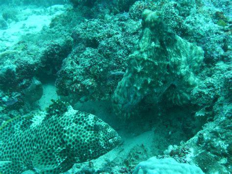 octopus grouper swansea reef planet waiting barrier university scientist fascinating ii features series unsworth richard ac