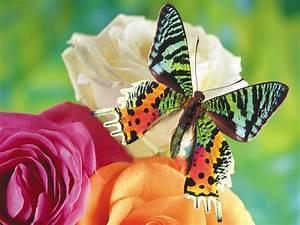 Nature multicolor flowers insects butterflies butterfly ...