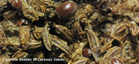 insects   food pantry nebraska extension