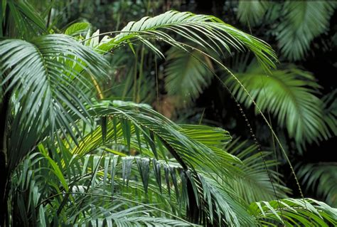 images of plants images gt plants