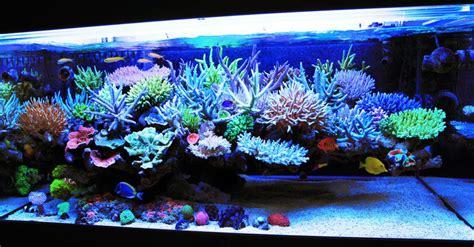 salt water fish tank pros and cons freshwater or saltwater aquarium tropical fish keeping