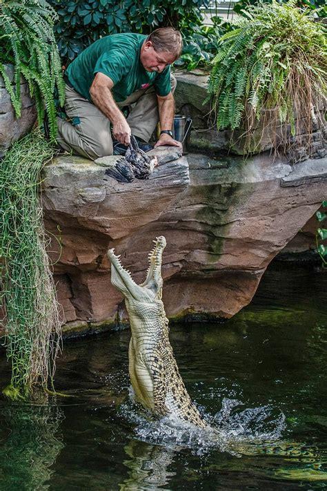 zoo doku eisbaer affe  wilhelma