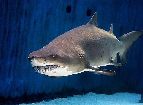 aquarium   pacific shark lagoon shark lagoon