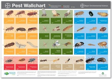 insectidentificationchart    publications