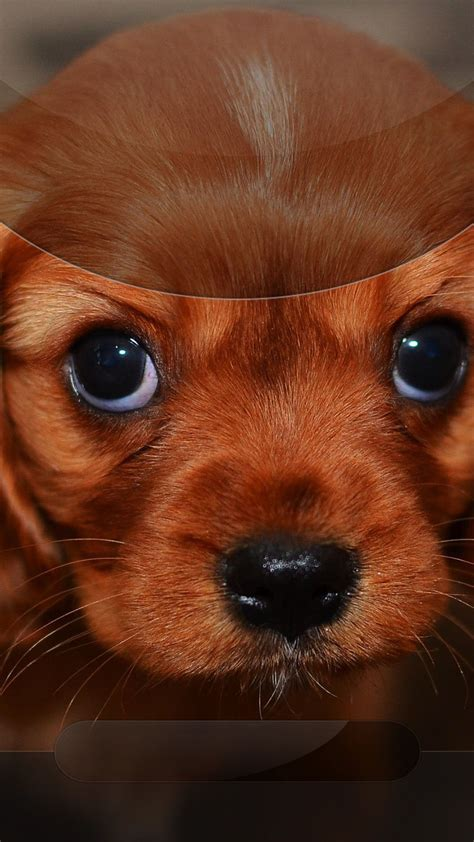 Adorable Puppy Lock Screen Wallpaper Iphone by Tap And Get The Free App Lockscreens Creative Puppy