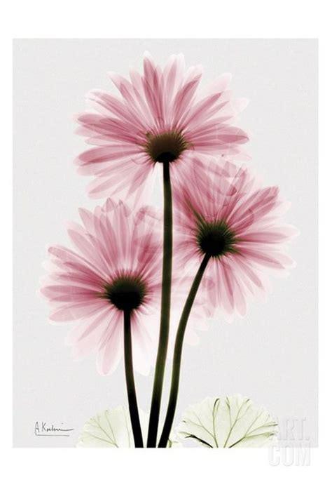 gerbera daisy watercolor tattoo google search rysunki