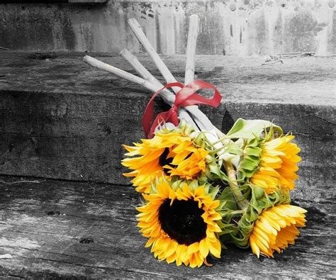 touch  color sunflower bouquet black white background