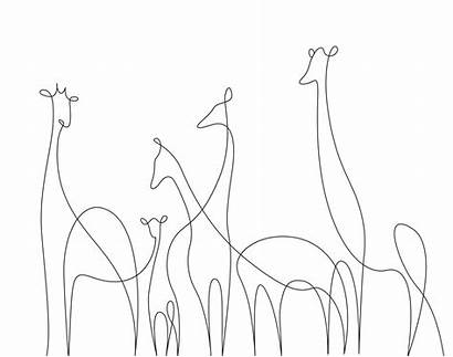 Line Drawings Animals Minimal Elegant Wild Single