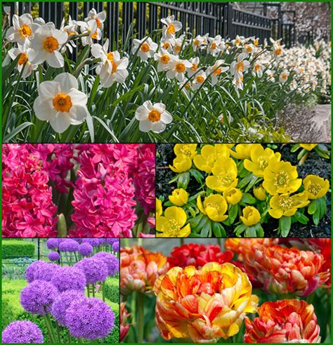 planting services personal touch landscaping gardening