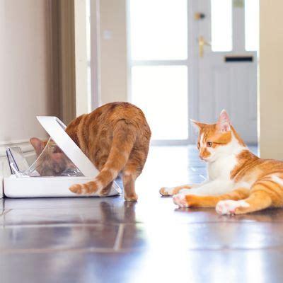 Microchip Cat Feeder Uk 2019