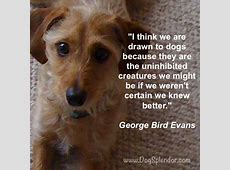 Tuesday Dog Quotes QuotesGram