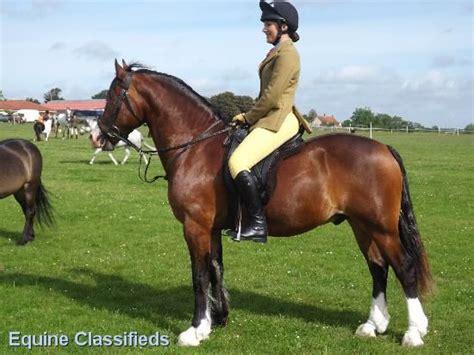 horses equestrian advertising visitors college games