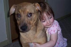 Laisser Un Chien Seul Quand On Travaille : enlacer un chien a de fortes chances de le placer dans une situation stressante gurumeditation ~ Medecine-chirurgie-esthetiques.com Avis de Voitures