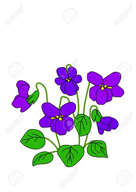 delicate violet clipart clipground