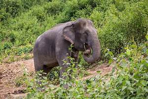 Cuddling With Elephants in Thailand | Uneven Sidewalks ...